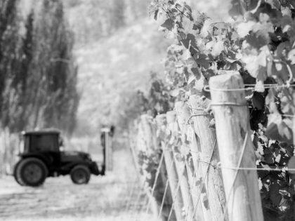 "Free Webinar ""Wine Vision 2040"""